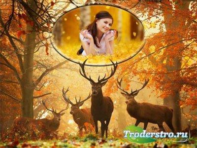 Рамка для фотографии - Прогулка по лесу