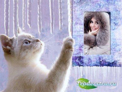 Рамка для фотошоп - Милый котик зимой