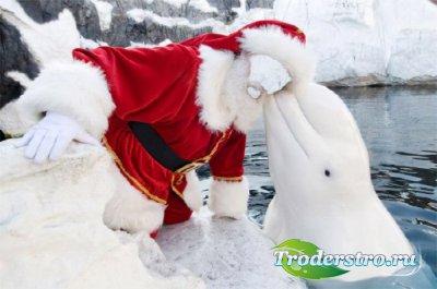 Photoshop шаблон - В костюме деда мороза с китовидным дельфином