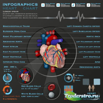 Infographics medical 13 pulse of the heart (vector)