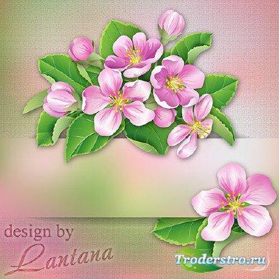 Psd исходник - Ветка яблони цветущей