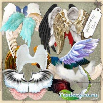 Клипарт на тему фэнтази - Крылья темных и светлых ангелов