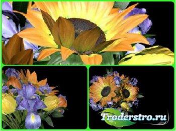 Футажи и переход с альфаканалом - Букет цветов