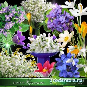Весенние цветы - лесные фиалки, подснежники, ландыши, крокусы, сон-трава -  ...