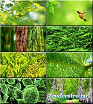 Сборник обоев - Зелень #204