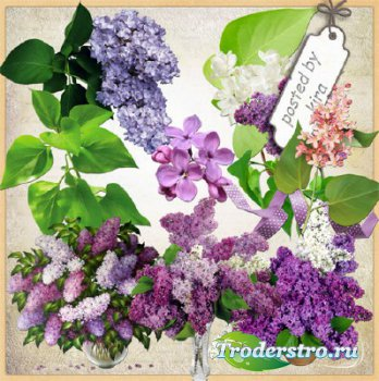 Весенний клипарт - Цветы сирени на прозрачном фоне