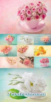 Цветочные фоны в нежных тонах - растровый клипарт
