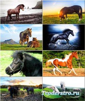 Обои для рабочего стола - Красивые лошади #285