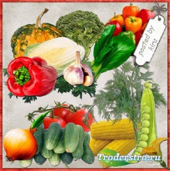 Клипарт для оформления - Овощи в png