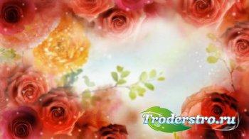 Фоновый футаж с розами