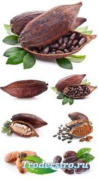 Какао бобы - растровый клипарт