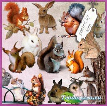 Клипарт без фона - Белки, зайцы и кролики