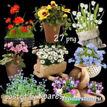 Клипарт для дизайна, прозрачный фон - Садовые и комнатные цветы в корзинах, ...