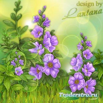 PSD исходник - Весенние цветы лесные, загадочные голубые