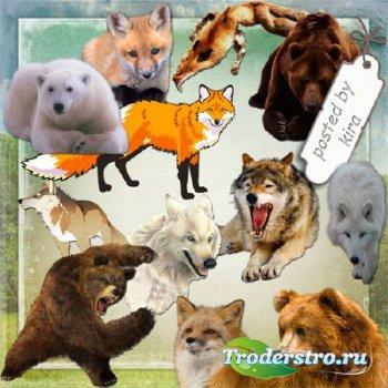 Клипарт на прозрачном фоне - Медведи, лисицы и волки