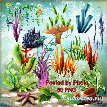 Клипарт на прозрачном фоне - Водоросли, кораллы