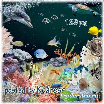 Подборка клипарта для создания коллажей - кораллы, водоросли, тропические р ...