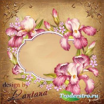 PSD исходник - Винтажная открытка с ирисами