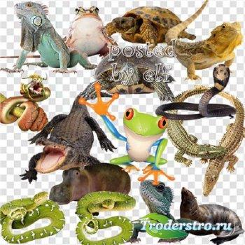 Клипарт - Ящерицы, змеи, лягушки, черепахи, крокодилы