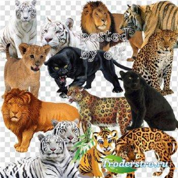 Клипарт - Пантеры, тигры, львы , леопарды