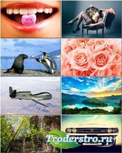 Красочные обои - Коллекция на разные темы #247