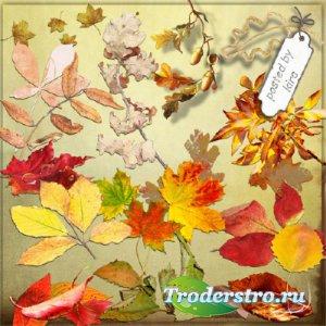Осенний клипарт - Кленовые, дубовые и другие листья