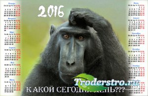 На 2016 год календарь - Обезьяна в раздумьях