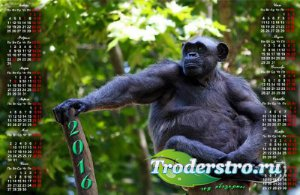 Календарная сетка - Шимпанзе на ветке