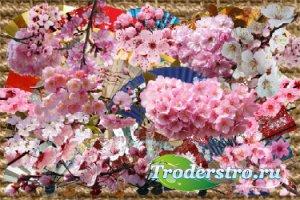 Клипарт Японские веера и ветки сакуры