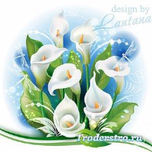 PSD исходник - Каллы красивы и горды, в них столько нежной красоты
