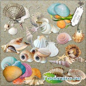 Клипарт морской - Разные ракушки на прозрачном фоне
