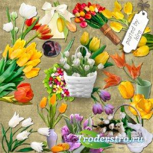 Клипарт - Разноцветные тюльпаны, кроме красных и розовых