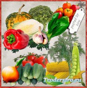 Клипарт огородний - Овощи на прозрачном фоне