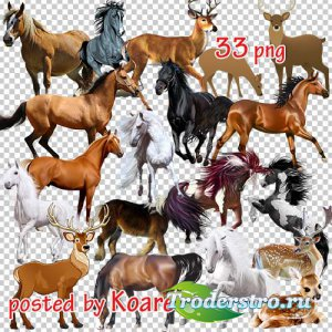 Png клипарт - Олени и лошади