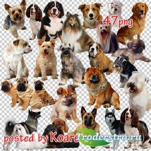 Png клипарт на прозрачном фоне - Собаки и щенки различных пород