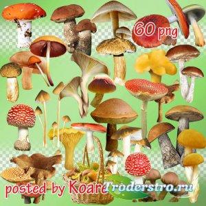 Png клипарт на прозрачном фоне - Грибы и корзины с грибами