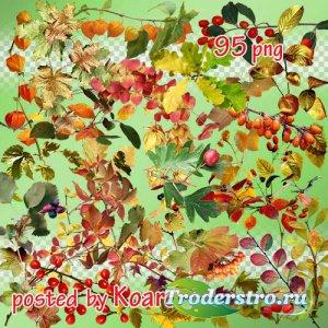 Png клипарт - Осенние листья, ветки, ягоды
