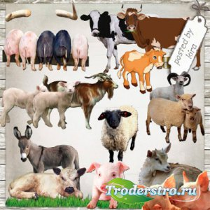 Клипарт - Коровы, козы, свиньи и другие домашние животные в PNG