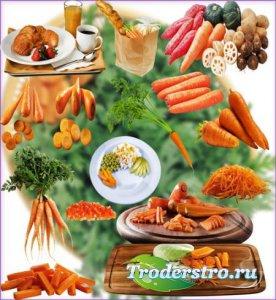 Новые клипарты Png - Красная морковь