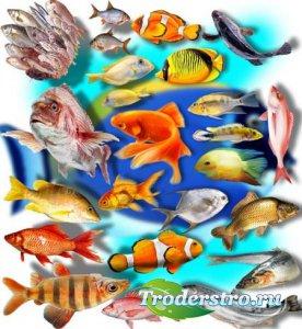 Клипарты png без фона - Рыбное ассорти