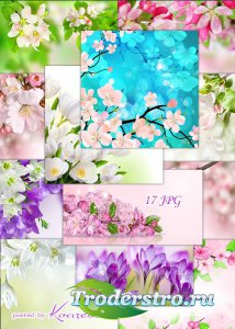 Подборка цветочных растровых фонов для дизайна - Весенние цветы