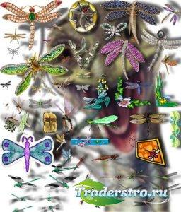 Png Клип-арты - Разноцветные стрекозы