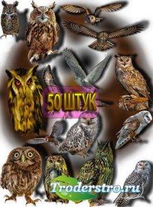 Коллекция Png клип-артов - Ночные совы