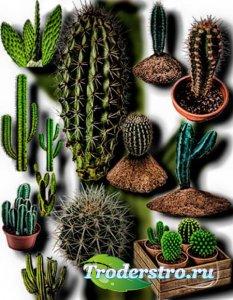 Клип-арты картинки - Колючие кактусы
