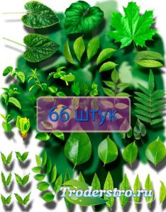 Фотошоп Png клип-арты - Листья растений