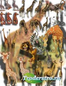Клипарты png - Веселые жирафы