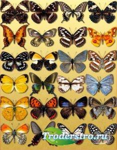 Растровые клип-арты - Декоративные бабочки