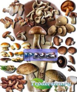 Новые клипарты Png - Съедобные грибы
