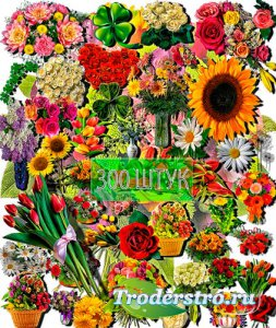 Клип-арты для фотошопа на прозрачном фоне - Разнообразные цветы