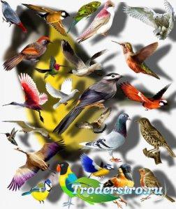 Png Клипарты - Цветные птицы